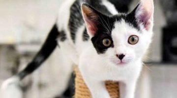 Kenali Tanda-tanda Alergi Kucing dan Cara Mengatasinya