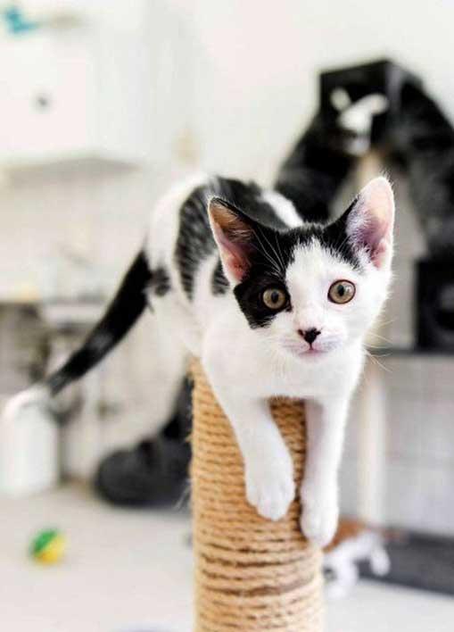 Kenali Tanda tanda Alergi Kucing - Kesehatan : Kenali Tanda-tanda Alergi Kucing dan Cara Mengatasinya